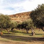 Con muchas posibilidades de futuro, el sector olivarero atraviesa una complicada situación.