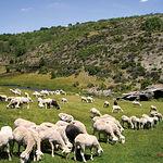 Rico en vegetación, el Parque sirve también de comida al magnífico cordero manchego de Castilla-La Mancha.
