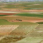 Los campos de La Mancha lucen como en ningún otro sitio en estas tierras de Don Quijote. Foto: Campo de Criptana.
