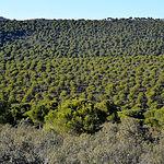 Repoblación forestal.