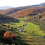 Parque Nacional del Hayedo de Tejera Negra, en Guadalajara, un monumento natural en Castilla-La Mancha.