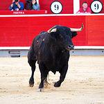 Rubén Pinar - Su primer toro-6 - Feria Taurina Albacete - 14-09-16 - Para web