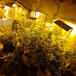 La Guardia Civil de Albacete detiene a cuatro personas e interviene 35  kilos de marihuana