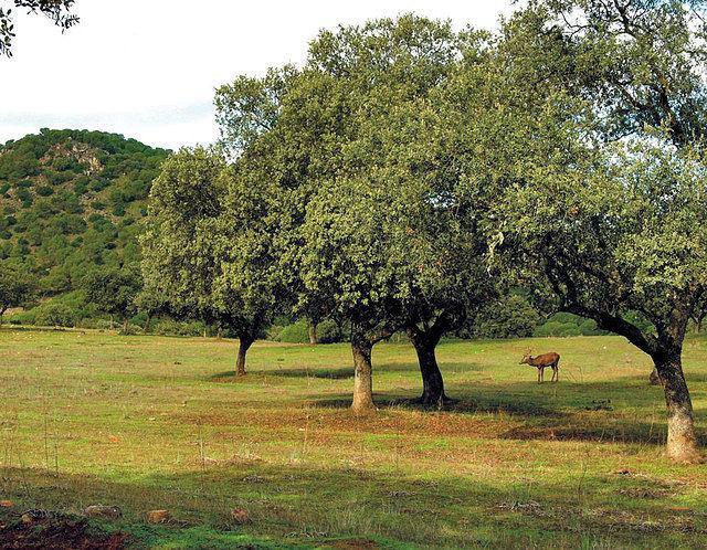 Castilla-La Mancha posee una gran extensión de espacios cinegéticos.
