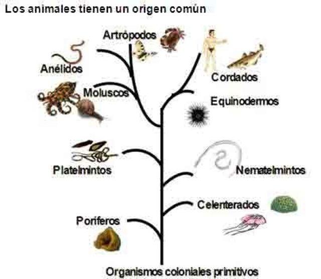 Evolución de los animales. Fuente Internet