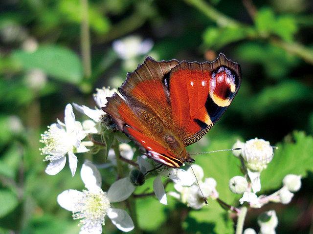 La Serranía de Cuenca se distingue por la gran variedad de mariposas que la habitan.