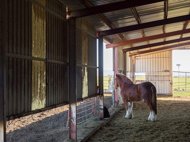 """Cuadra de caballos de Juan Cantos \""""Pimpi de Albacete\"""""""