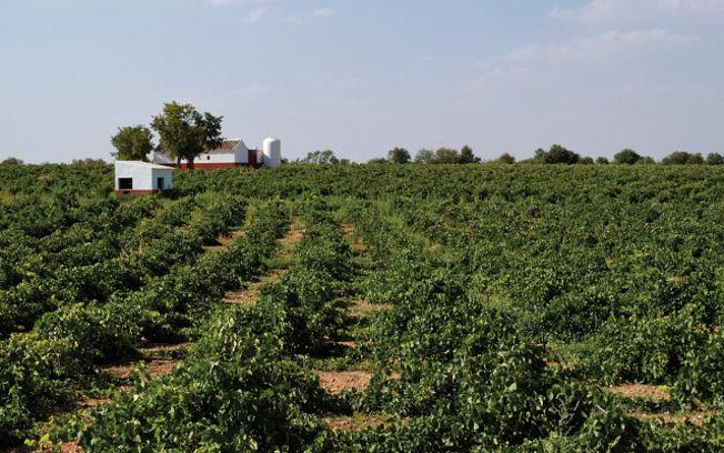 El sector vitivinícola tiene en Castilla-La Mancha una importancia socioeconómica absolutamente clave