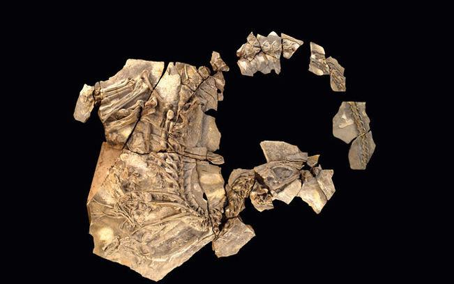 Imagen del hallazgo paleontológico del yacimiento conquense de Las Hoyas, el dinosaurio 'Concavenator Corcovatus', el esqueleto articulado del dinosaurio más completo encontrado hasta ahora en la Península Ibérica que se muestra en el Museo de las Ciencias de Cuenca.