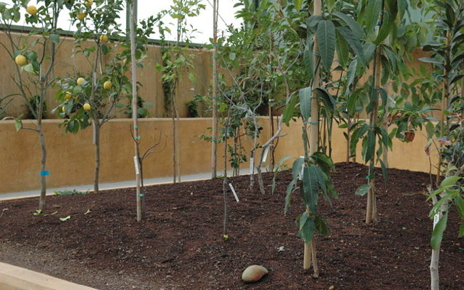 El jard n bot nico la joya desconocida de albacete for Jardin botanico castilla la mancha