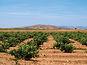 Castilla-La Mancha espera con optimismo la Reforma de la OCM del vino